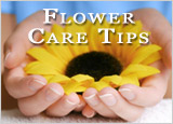 Flower Care Tips :: Click Here